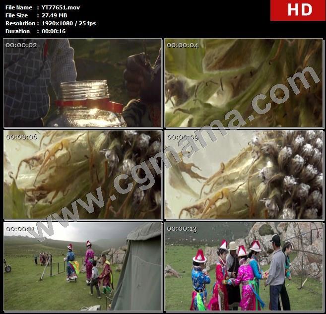 YT77651泡酒水母雪莲阳光藏族青稞酒草原帐篷高清实拍视频素材