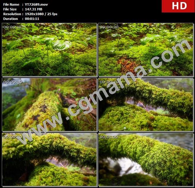 YT72689微观自然植被小草苔藓雨水树干高清实拍视频素材