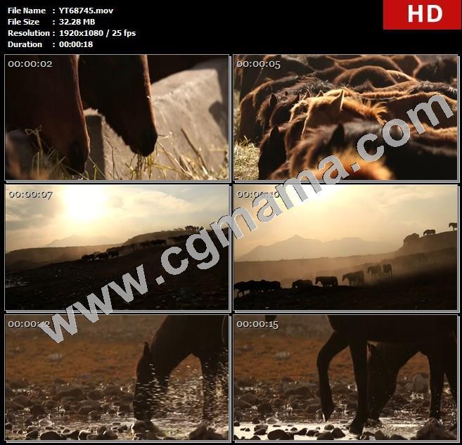YT68745水洼马匹草原阳光山丘高清实拍视频素材