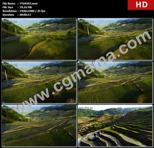 YT69243植物梯田山脉植物水稻树木植被阳光高清实拍视频素材