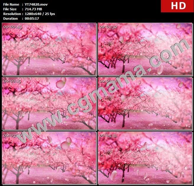 YT74820戏曲豫剧唯美十里桃林花瓣飘落LED大屏晚会高清舞蹈背景视频素材定制
