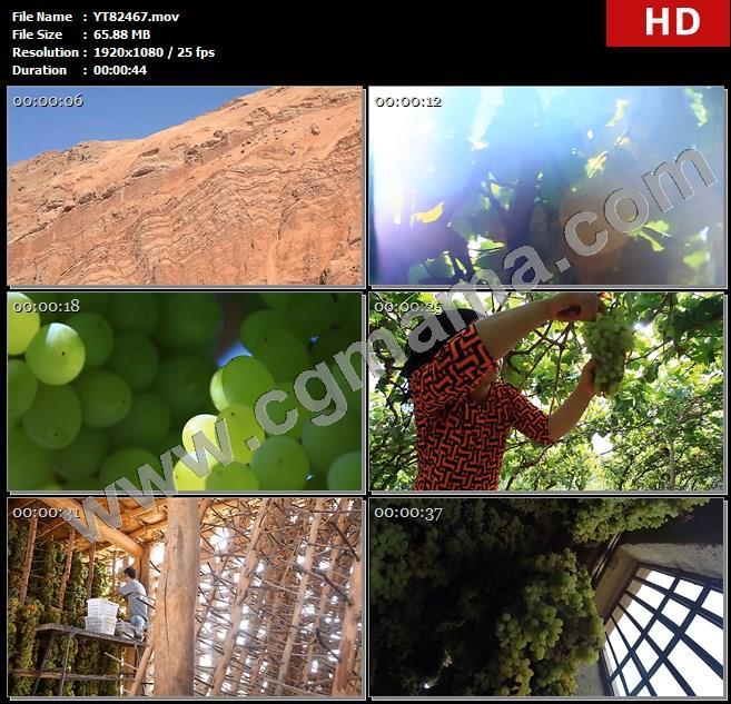 YT82467吐鲁番地表草木新疆藤架葡萄采摘妇女收获晾晒葡萄干制作特色高清实拍视频素材