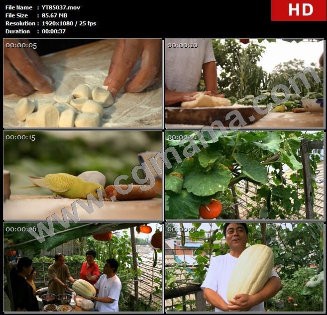YT85037包水饺小鸟吃米菜园倭瓜屋顶菜园抱瓜高清实拍视频素材