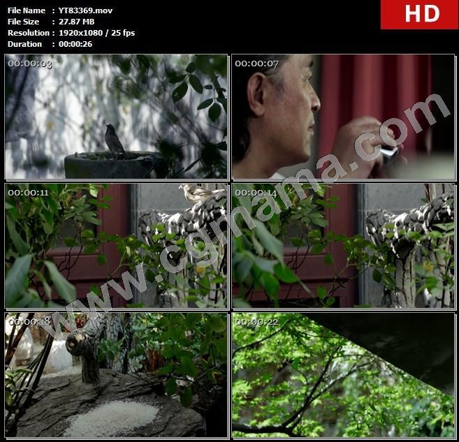 YT83369老人小鸟望远镜树枝麻雀米粒树木高清实拍视频素材