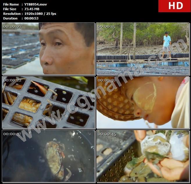YT88954缅甸绞漂岛缅甸蟹养殖基地巡视软壳蟹高清实拍视频素材