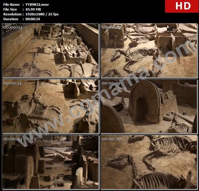 YT89832天子驾六博物馆周王室墓葬遗址葬坑骏马骸骨高清实拍视频素材