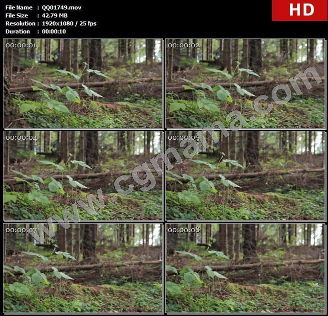 QQ01749清新森林茂盛树木花草生长特写镜头大自然记录实拍高清实拍视频素材