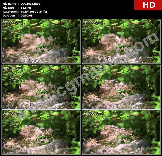 QQ03615清澈水流绿草茂盛生长镜头变焦特写自然景色高清视频拍摄高清实拍视频素材