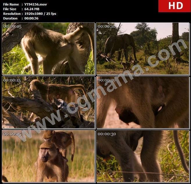 YT94156树木草木狒狒大象非洲大陆动物高清实拍视频素材