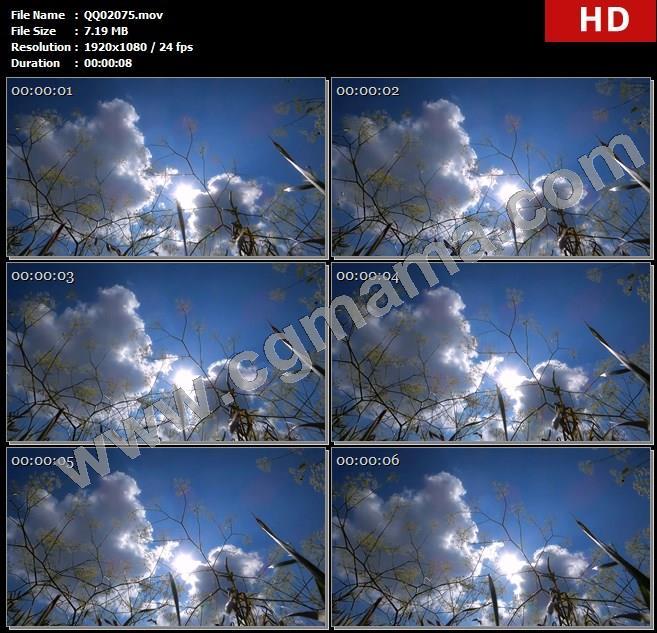 QQ02075阳光明媚微风吹拂遍地田野花丛植物飘动姿态延时镜头实拍高清实拍视频素材