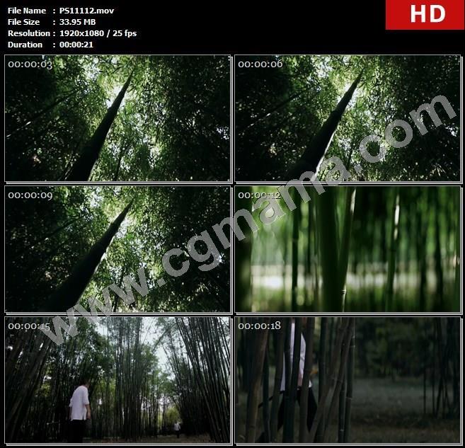 PS11112竹林竹子阳光刀剑收藏家古剑落叶高清实拍视频素材