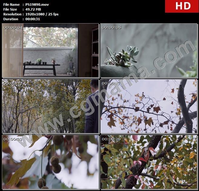 PS19890纱帐木桌植物树木枯叶公园枫叶落叶小豆子香樟树高清实拍视频素材
