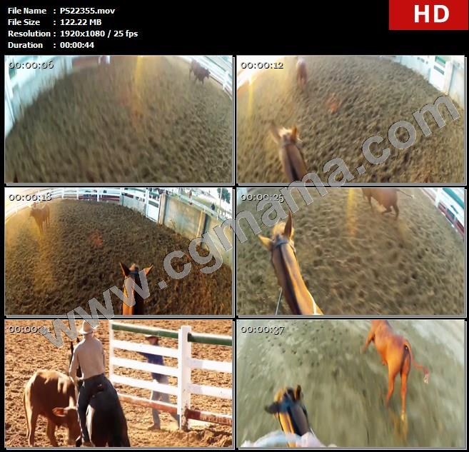 PS22355澳大利亚昆士兰的罗克汉普顿牛肉之都骑马赶牛比赛追赶牛比赛场地选手视角