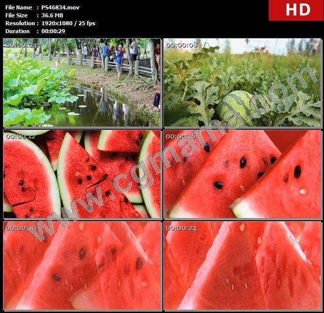 PS46834盛夏池塘荷叶钓鱼夏季瓜果西瓜高清实拍视频素材