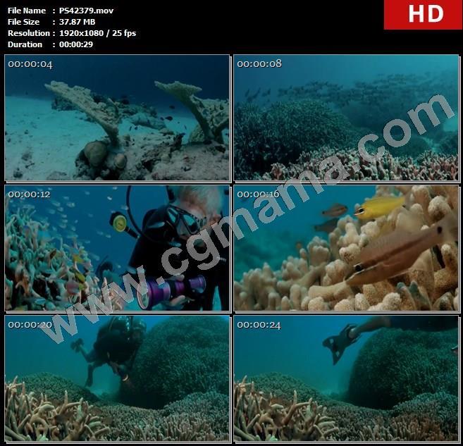 PS42379海底鱼群珊瑚海鱼生物太平洋生物学家潜水装备高清实拍视频素材