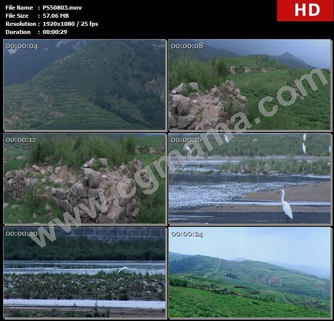PS50803飞鸟石块野草动物植物长城遗迹农田庄稼高山高清实拍视频素材