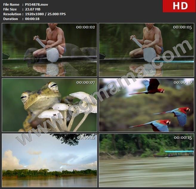PS54878合理船只青蛙鹦鹉亚马逊河流小船高清实拍视频素材
