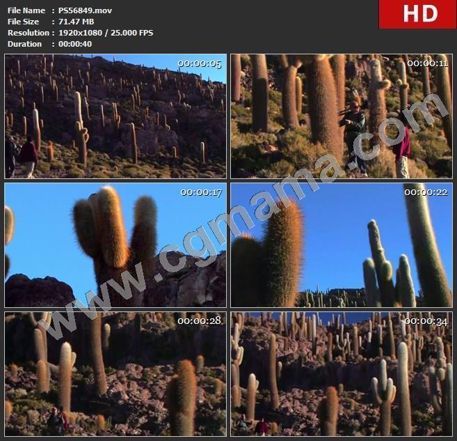 PS56849仙人掌岩石旗帜探险攀登高清实拍视频素材