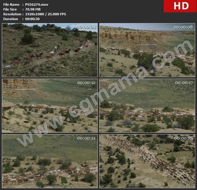 PS56274山区野马马群奔跑高清实拍视频素材
