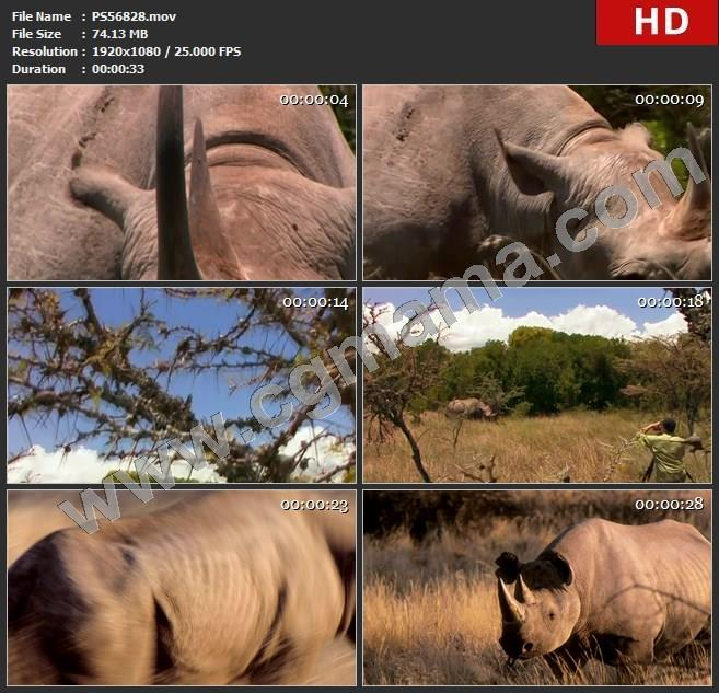 PS56828犀牛夜深动物费犀牛吃草进食非洲摄影师拍摄拍照照片图片高清实拍视频素材