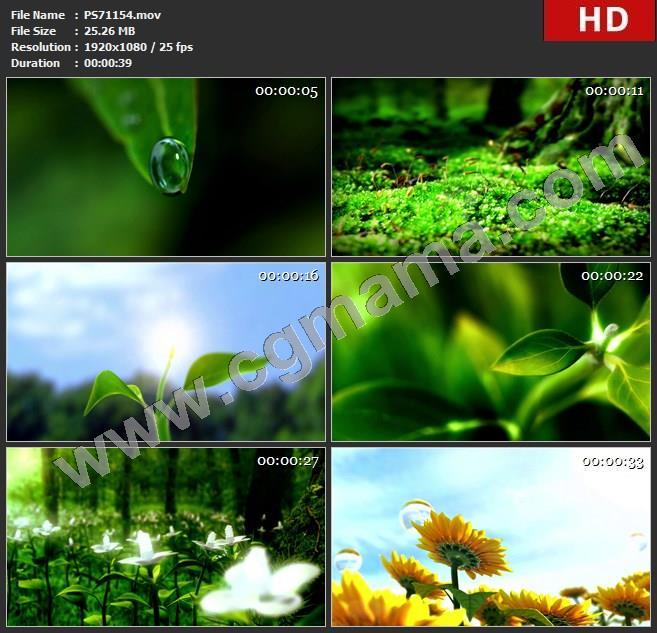 PS71154水滴树叶发芽生长向日葵视频素材大自然绿色植物绿叶高清实拍视频素材