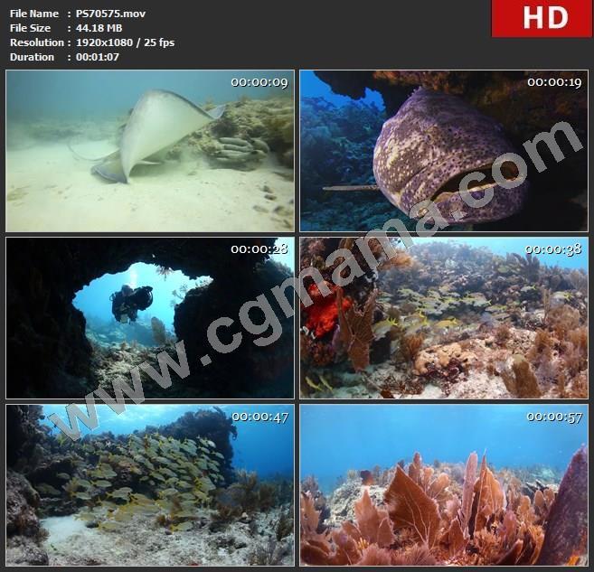 PS70575海洋世界美丽的鱼群宣传视频高清实拍视频素材