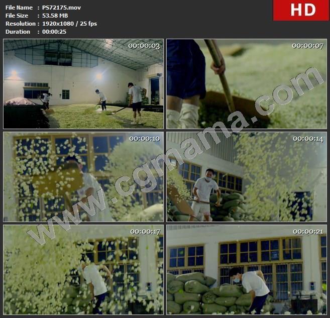 PS72175茉莉花车间花茶加工花朵高清实拍视频素材