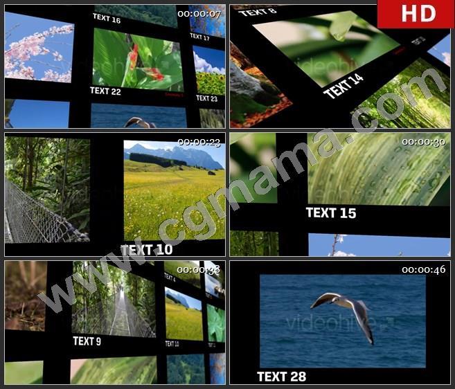 AEB01818 优雅的视频墙动画模板AE模板