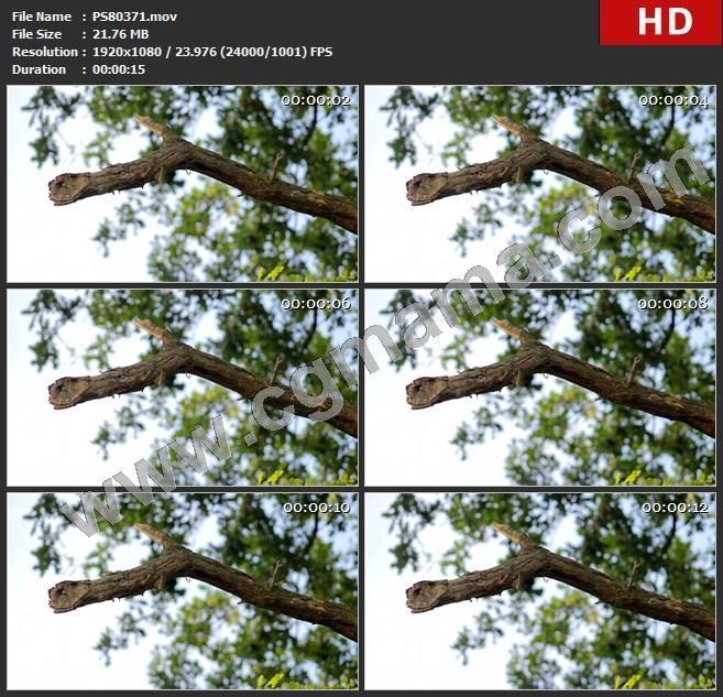 PS80371伍兹分支叶在户外树棕色的森林绿色背景自然高清视频素材