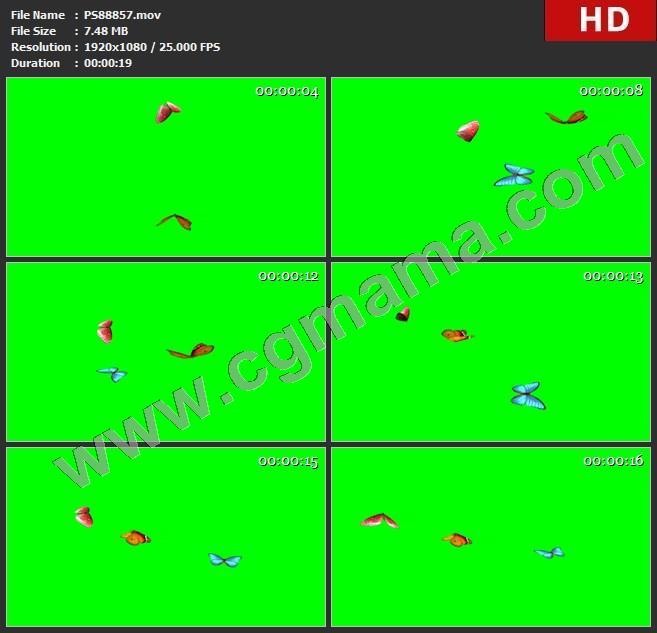 PS88857蝴蝶飞舞绿屏透明通道视频素材