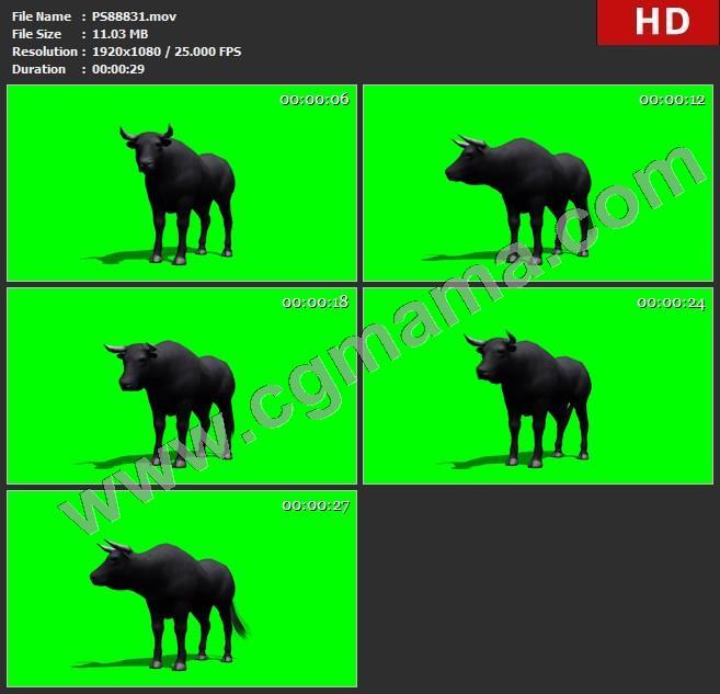 PS88831黑牛野牛1绿屏透明通道视频素材