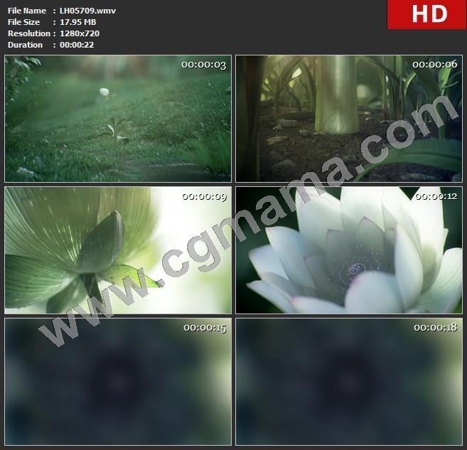 LH05709唯美花开鲜花高清led歌舞舞蹈大屏晚会视频素材