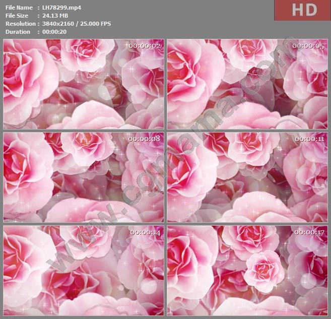 ALH78299晚会大屏背景视频素材4k牡丹花舞台背景影视模板