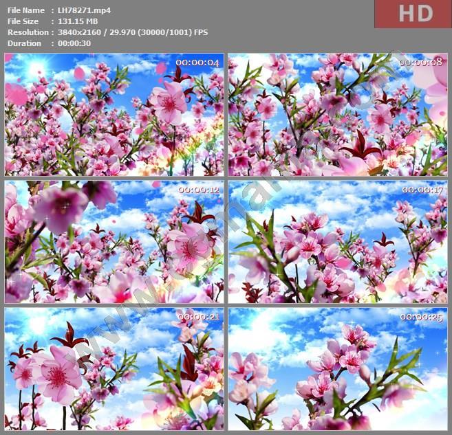 ALH78271晚会大屏背景视频素材4K梅花穿梭素材影视模板